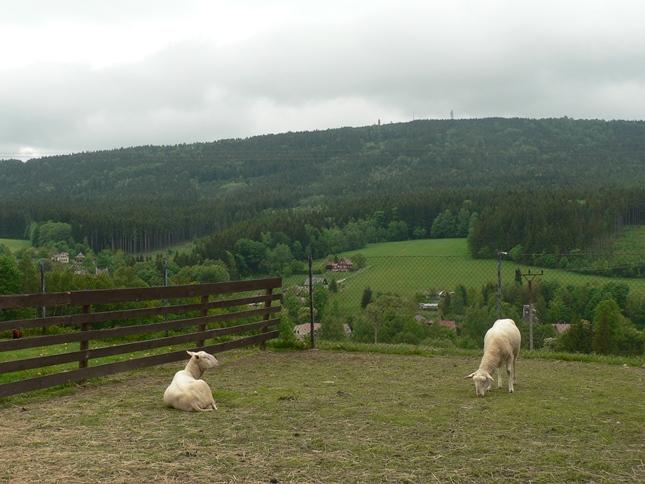 Kozí farma v Pěnčíně